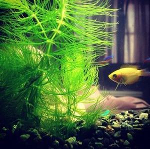 金魚水草5