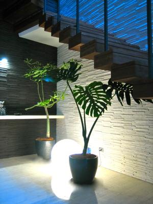 間接照明と観葉植物