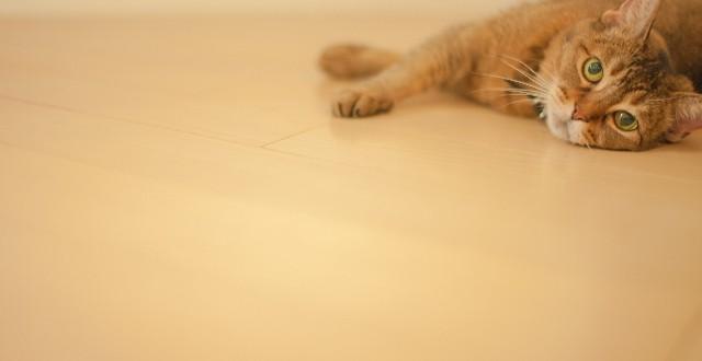 フローリングに寝転ぶ猫
