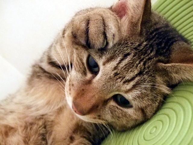 猫の困ったポーズ