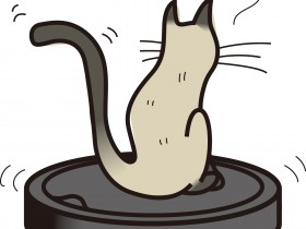 ルンバとシャム猫